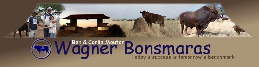 Wagner Bonsmaras Cattle Farming